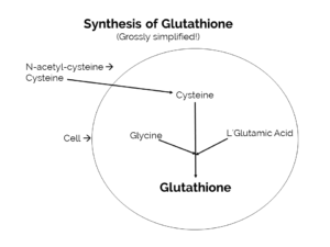 Synthesis of glutathione
